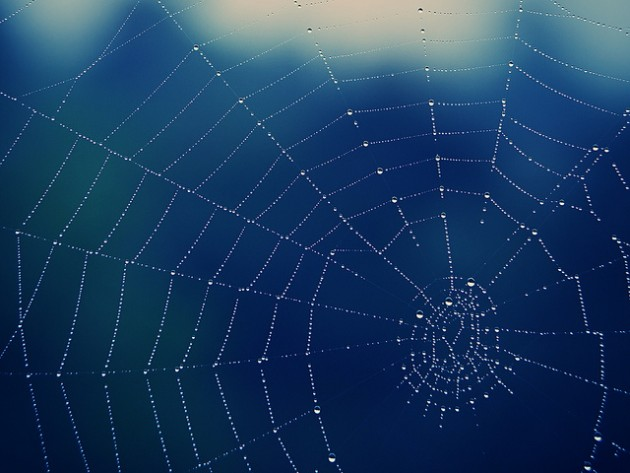 SpiderWeb BY 55Laney69 [CC:BY 2.0]